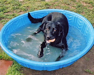 Neva Dionisio of Youngstown wonders if the pool is too little or if Rascal's too big. Nonetheless, this was Rascal's favorite spot last summer, ball and all. This summer, he'll get a new (maybe bigger) pool, she says.