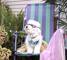 Foxie Roxie Triveri
