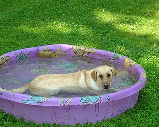 Pup chills in back yard. Brian Roberts sent photo