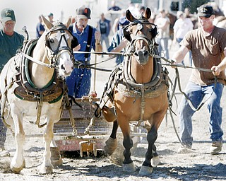 Terry Pinkerton (right) of St Mary's West Va and his team of draft ponies compete in Pig Iron Derby at the Canfield Fair Saturday. wd lewis