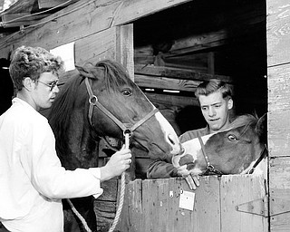 "FIFTY YEARS AGO: The Canfield Fair has always attracted youth, as these shots from the 1958 edition show. Luther Mackey, left, and Harry Dailey, both of Columbiana, introduce their horses, ""joe Girl and Beedle Bum,"" in the old stables on the fairgrounds."