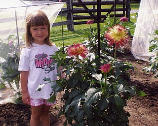 Adriana Habeger of Salem visits her grandparents' garden, also in Salem. Joyce Habeger (grandmother) sent the photos from the dahlia garden that she and Adriana's grandfather, Dave, tend all summer.
