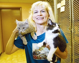 PICK ME: Susan Miller, Lawrence County Humane Society board member, holds kittens waiting to be adopted at the society's New Castle headquarters.