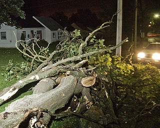 Storm damaged tree on North Roanoke and Mahoning in Youngstown.