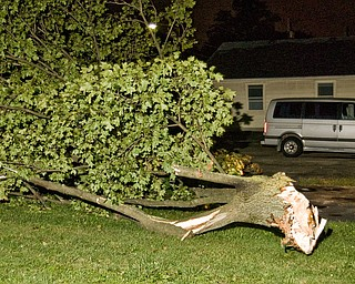 Storm damaged tree on Elm Street in Struthers.