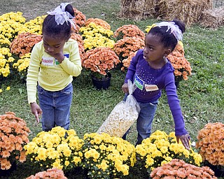 PICKING FLOWERS: Twins Camille and Clarissa Brown, 3, of Youngstown have separate opinions on which mums to buy. They were only two of the thousands Sunday who browsed at Oktoberfest in Boardman Township Park.