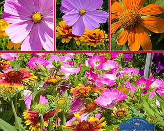 Lashawn Hull of Poland visited Fellow Riverside Gardens several times to see their beautiful flowers.