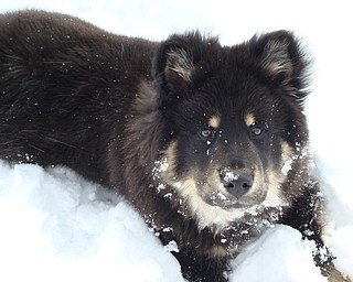 Puppy Skye Lyons gets acquainted with the snow.