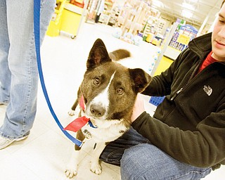 Nick Lamb, age 15 of Boardman pets Shiloh, an Akita mix, prior to his father filling out an application to adopt the dog from Wags Canine Rescue at the Petsmart in Boardman. Wags Canine Rescue is a group of about 12 people who foster previously abandoned and abused dogs in their homes and have arranged the adoption of over 500 dogs since their start in May of 2004.
