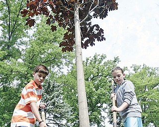 C,H. Campbell Elementary School 4th grade students Lake Bennett, left, and Gabby Eberly, help with a Norway Red Maple tree that was planted outside their school Thursday in Canfield.
