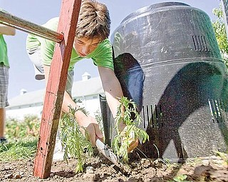 George Colettis, age 14 of North Lima, plants marigold during a children's gardening program at the Mill Creek MetroPark Farm in Canfield on Wednesday morning. Colettis' green shirt designates him as a Green Thumb Volunteer, someone who has been in the gardening program for over two years and helps younger children with their plots.