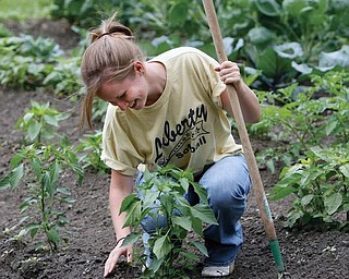 CLEANING UP: Hope Hrabowy, 17, of Youngstown, pulls weeds in a garden at a house of South Truesdale Avenue. Members of the Give the Children a Chance Choir and the Mahoning Columbiana Training Association cleared trees, removed tires and debris, mowed grass and planted gardens Tuesday in the 100 block of South Truesdale.