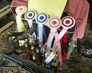 Madelynn Felgar on  -and some of her ribbons and trophys - at their Beloit  home - robertkyosay
