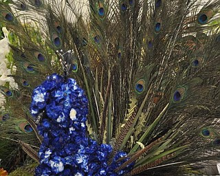 A peacock of flowers.