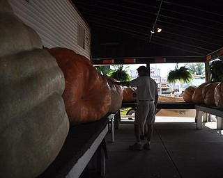 Giant pumpkins on display at the Canfield Fair. Sept. 4, 2009
