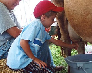 MILKING THE SUMMER: Marcus Gromofsky, grandson of Emma Lou Gromofsky of Boardman and the late Bill Gromofsky, learned how to milk a cow at the Canfield Fair while vacationing here. He is the son of Alan and Cindy Gromofsky of Brewster, N.Y.