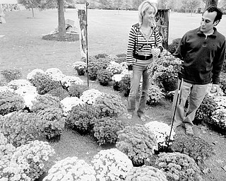 Alison Akuszewski and George Stavrenos of Boardman, right, view mums from Lutz Greenhouse in Salem.