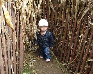 WALKING TALL: Mary Giovanna Melone, 18 months, of Boardman making her way through the Children's Corn Maze at White House Farms.