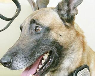 K-9 police dog Rebel