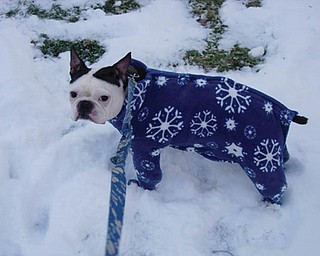 Dee Thomas of Youngstown says her dog Emmett hates the snow. She had custom footies made for him. In the winter, he sits by the door, waits for her to put his footies on, and off they go.