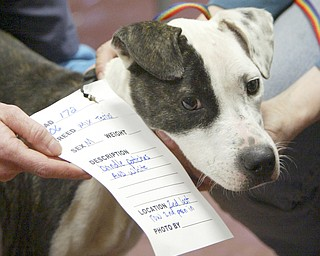 More than 100 dogs were seized from a Gustavus Township home last week. The Animal Welfare League is caring for the animals, including washing, grooming and medical attention, at undisclosed locations.