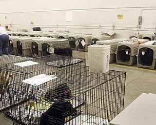 More than 100 dogs were seized from a Gustavus Township home last week. The Animal Welfare League is caring for the animals at undisclosed locations.