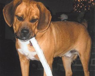 Brutus belongs to Ron and Lisa Osiniak of Campbell.