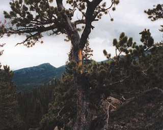 Elli Rinko of Canfield sent this picture taken at Rocky Mountain National Park.
