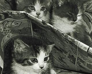 """Eeney, Meeney and Sleepee,"" taken by Michael J. Lacivita of Youngstown."