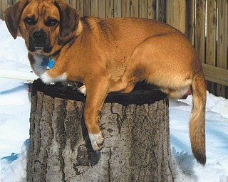 Would you say Brutus looks stumped? He belongs to Ron and Lisa Osiniak of Campbell.