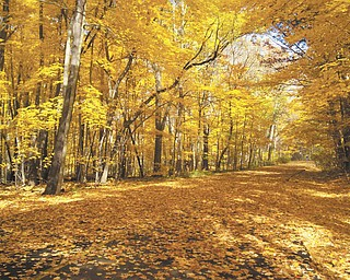 This picture was taken at one of the trails in Mill Creek Park in October of 2009 by Jessica Andrews..