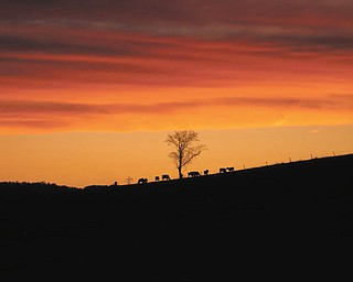 Teri Cecil sent this picture of a sunset outside her back door in a former home in New Philadelphia, Ohio, with cows in the distance..