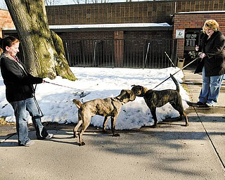 Cathy Blessing of Austintown, left, and Cindy Nasser of Boardman, volunteers with Canine Crusaders, walk dogs at the Mahoning County Dog Pound. Canine Crusaders doesn't have its own facility to house dogs although it would like to one day, if it can raise the funds.