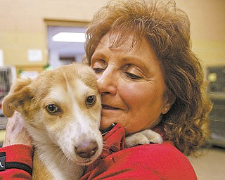 Gloria Joy Polisso of Boardman is a volunteer with Canine Crusaders, and she's holding one of the pups at the Mahoning County Dog Pound. These volunteers visit the pound during kennel hours to walk the dogs, and work with other rescue groups to try to save the dogs there.