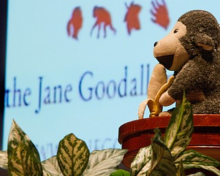 "Geoffrey Hauschild|The Vindicator.Jane Goodall gives a presentation at Stambaugh Auditorium on Tuesday evening, entitled ""Gombe and Beyond: The Next 50 Years,"" commemorating the 50th anniversary of her living amongst and studying Chimpanzees while living in Gombe, Tanzania."