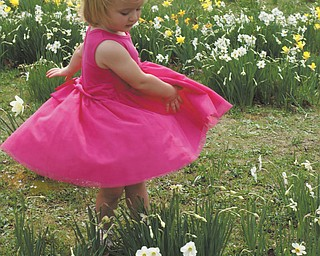 Ashlynn Mason, the 2-year-old granddaughter of Laurie and Mike Fox, enjoyed dancing through the daffodil field at Mill Creek Park during a recent visit.  Ashlynn and her parents, Matthew and Beth, live in Salem.
