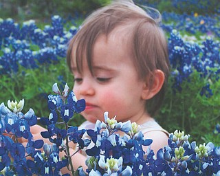 Briana Pietsch, 1, of San Antonio, Texas, is admiring the blue bonnets. She is the granddaughter of Joe and Linda Pagano of Girard.