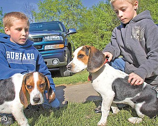 Derek, left, and Devon Williams, both 10, of Hubbard, pet beagles Scotty and Casey at Hubbard Conservation Club, where Trumbull County Beagle Club will sponsor Youth Beagle Day on Saturday at club grounds. The beagle club promotes the breed and conducts hunts.