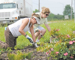 Volunteers with Liberty in Bloom dig into planting flowers in the triangle area off Belmont Avenue and Interstate 80 in Liberty Township as a truck travels by. Laura Williams, left, and Janice Coombs are among some 30 volunteers who prune, weed and plant in the all-volunteer beautification project.