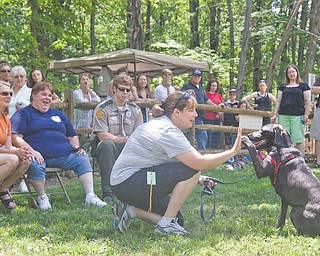 "Emily McVicker of Bristolville and her dog Lady show the judges how they give high-fi ves to each other. Lady, an 11-month-old charcoal Labrador retriever, won the ""Most Unusual"" trick competition at Doggie Days at Mosquito Lake Dog Park in Bazetta on Sunday."