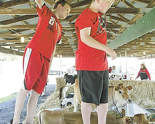 Hanging out in the cow barns at the Trumbull County Fair Tuesday were John Bates, left, of Kinsman and Brandon Elsea of Hartford. Both are 11.