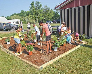 Seventh- and eighth-grade students from Youngstown city schools' summer gifted program help plant a garden to attract hummingbirds and butterflies at the Purple Cat on U.S. Route 422 in Coitsville. They worked Wednesday morning, and the garden was done before noon.