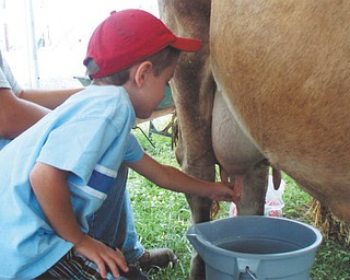Marcus Gromofsky, son of Alan and Cindy Gromofsky of Brewster, N.Y., is trying to milk a cow at the fair. He is the grandson of Emma Lou Gromofsky of Boardman and the late Bill Gromofsky.