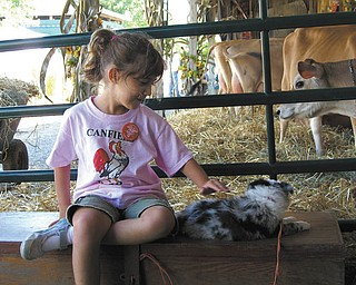 Hailey Kadivar of Bradenton, Fla., pets a puppy at the Canfield Fair. She was visiting with her grandparents, Bob and Joan Stroh of Poland.