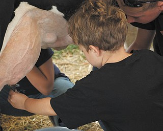 Tyler Kadivar of Bradenton, Fla., the grandson of Bob and Joan Stroh of Poland, learns how to milk a cow.