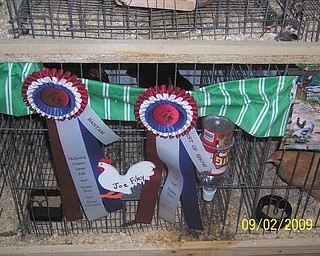 Joe Filey of North Lima won Bantam and Best of Show Grand Champion awards for his chicken. Here are his ribbons.