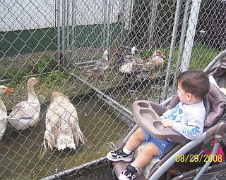 Vincent Boila of Struthers enjoys looking at the geese at the fair. This photo was submitted by Judy Wilson of Struthers, Vincent's grandmother.