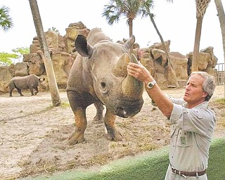"""** FILE ** In this May 10, 2000 file photo, Nationally recognized animal expert Jack Hanna  grabs the tusk of a black rhino after helping Busch Gardens Tampa Bay unveil plans for their newest attraction """"Rhino Rally"""" in Tampa, Fla. David Letterman's producers like it when Jack Hanna's zoo animals run amok on the show because it's good for laughs. Hanna, director emeritus of the Columbus Zoo, recounts 25 years of television appearances in his new autobiography. (AP Photo/Chris O'Meara)"""