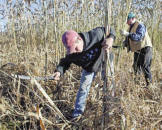 Bob Rea, right and his son John harvest sorghum on their Salem Twp. farm.