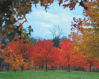 Lana VanAuker of Canfield shot this fall scene in Austintown Park.